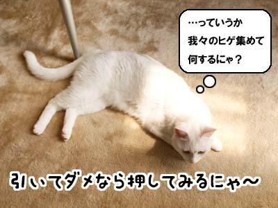 cat2031