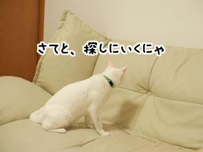 cat2035