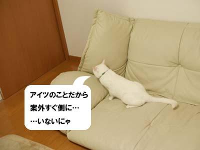 cat2036