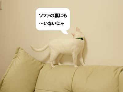 cat2037