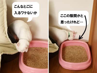 cat2038