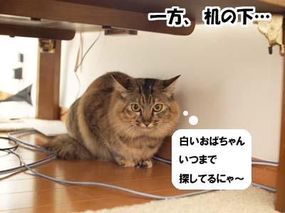 cat2039