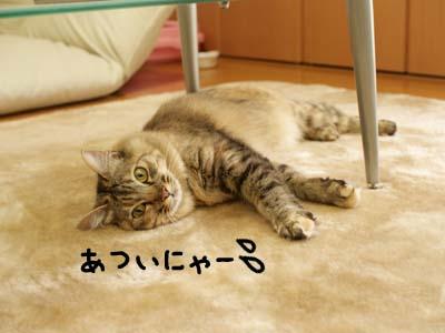 cat2040