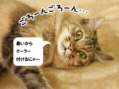 cat2041