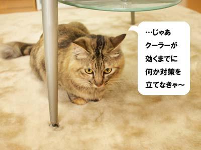 cat2042