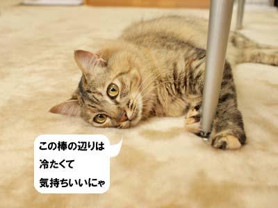 cat2043