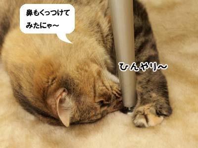 cat2044
