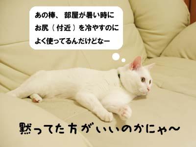 cat2045
