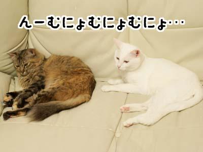 cat2047