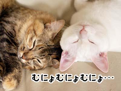 cat2052