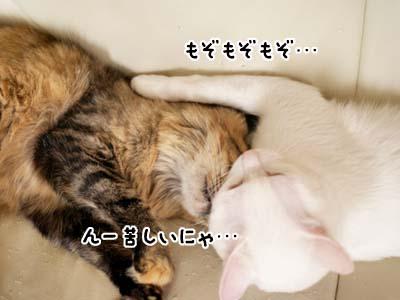 cat2053