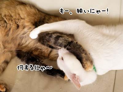 cat2054