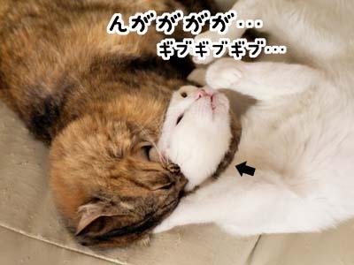 cat2055