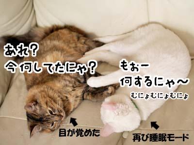 cat2056