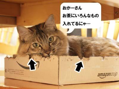 cat2059