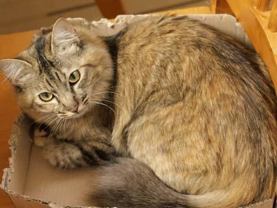 cat2060