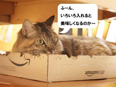 cat2061