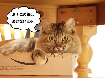 cat2062