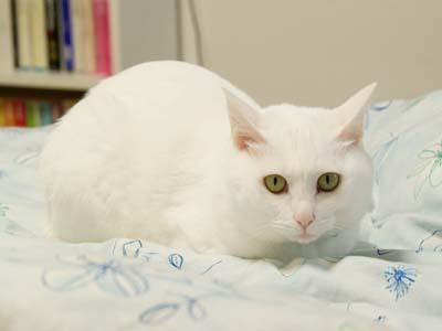 cat2064
