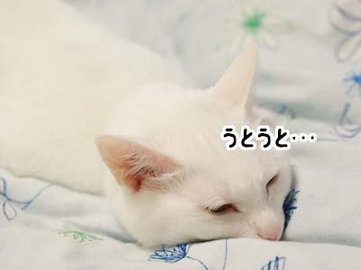 cat2065