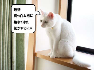 cat2069