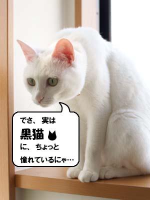 cat2070