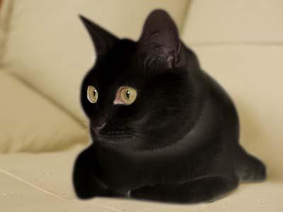cat2071