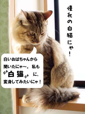 cat2072