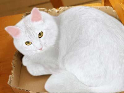 cat2073