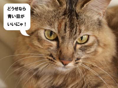 cat2074