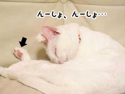 cat2079