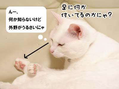 cat2080