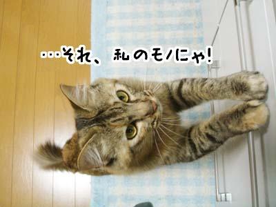 cat2085