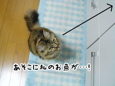 cat2086