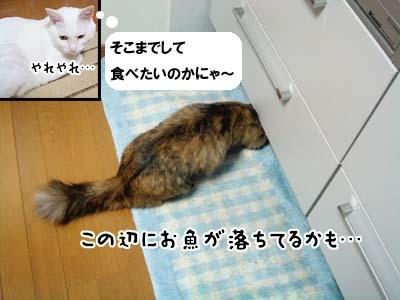 cat2087