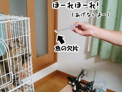 cat2088
