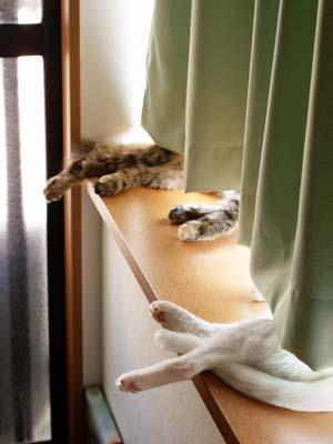 cat2089