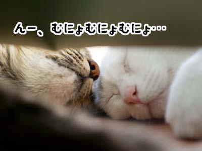 cat2092