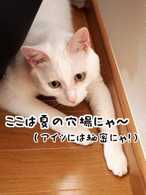 cat2104