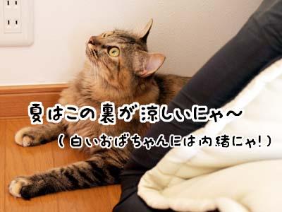 cat2106