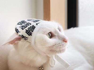 cat2110
