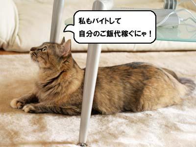 cat2113
