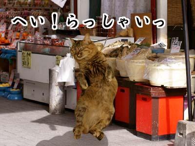 cat2114