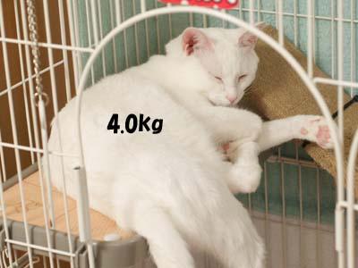 cat2120