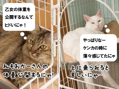 cat2121