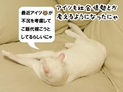 cat2127