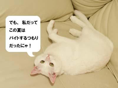 cat2128