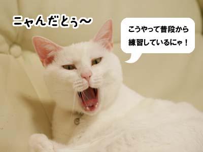 cat2129
