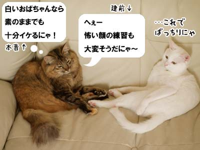 cat2132