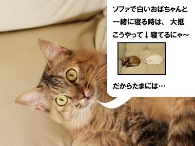 cat2133